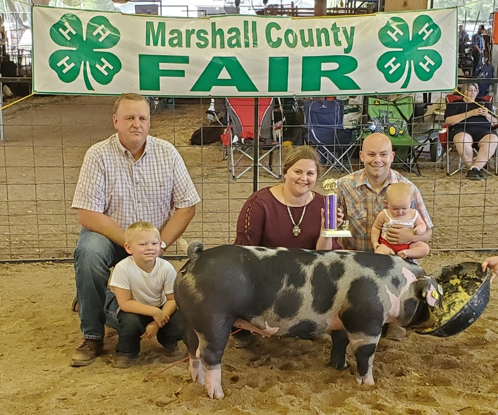 Rylie Borgerding Grand Champion breeding gilt 2019 Marshall county fair